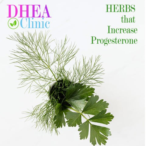dill is one herb that increases progesterone naturally