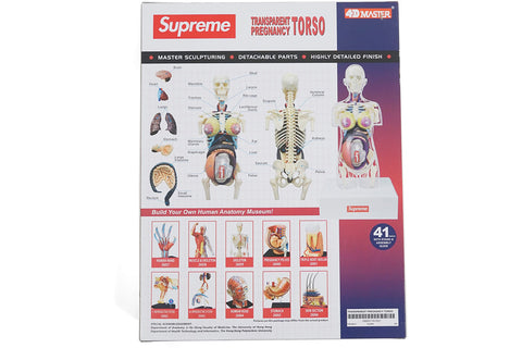 SUPREME FEMALE ANATOMY MODEL