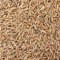 KFP LETHAL WINTER OATS®