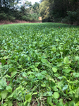 HIT LIST ELITE 8 FALL FOOD PLOT BLEND 1/2 ACRE