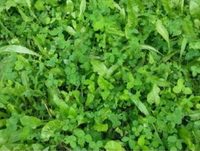 HIT LIST MASS BUILDER (LADINO/RED/CRIMSON CLOVER/ALFALFA/CHICORY) 10 LB BAG 1 ACRE