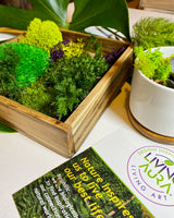 No maintenance required. Moss, preserved, art, frame, Living Aura, nature, biophilic, interior design, accessories