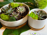 potted succulent , Succulent, plant, zen, low maintenance, nature, calm, comfort, plant