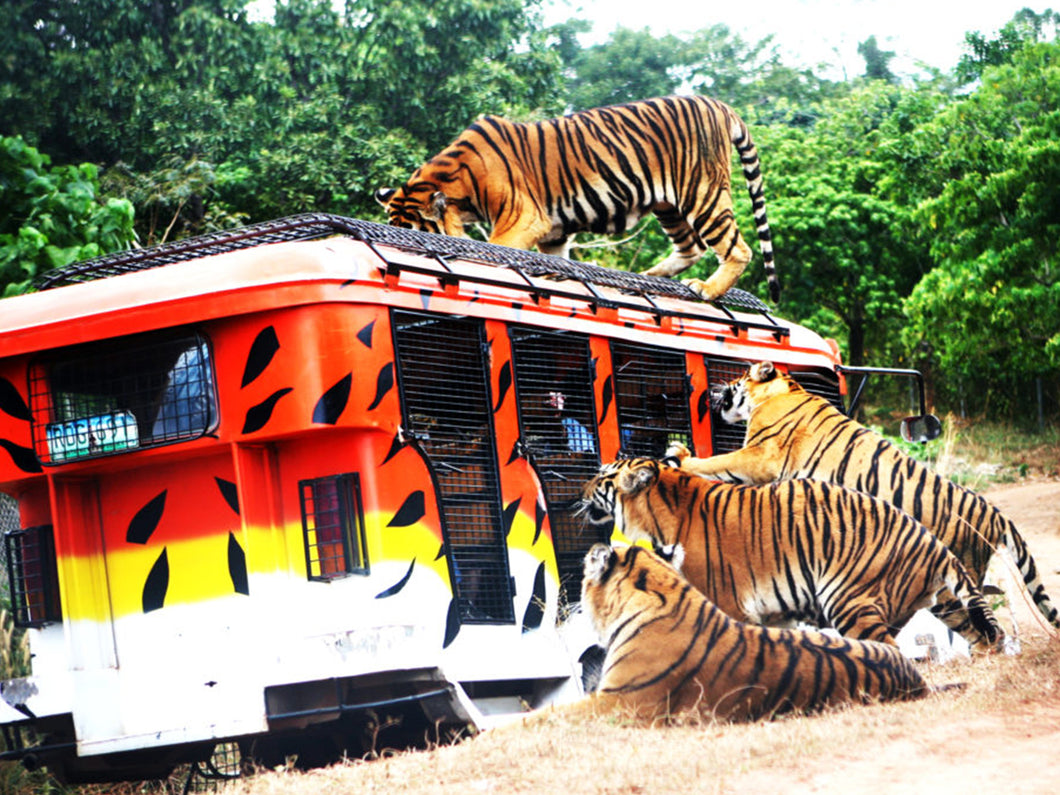 Zoobic Safari, Day Tour Access (Subic Bay, SBFZ, Olongapo City)