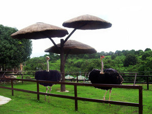 Zoocobia Fun Zoo, Day Tour Access (Clark, Pampanga)