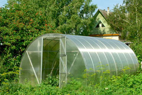 Green House & PolyTunnel