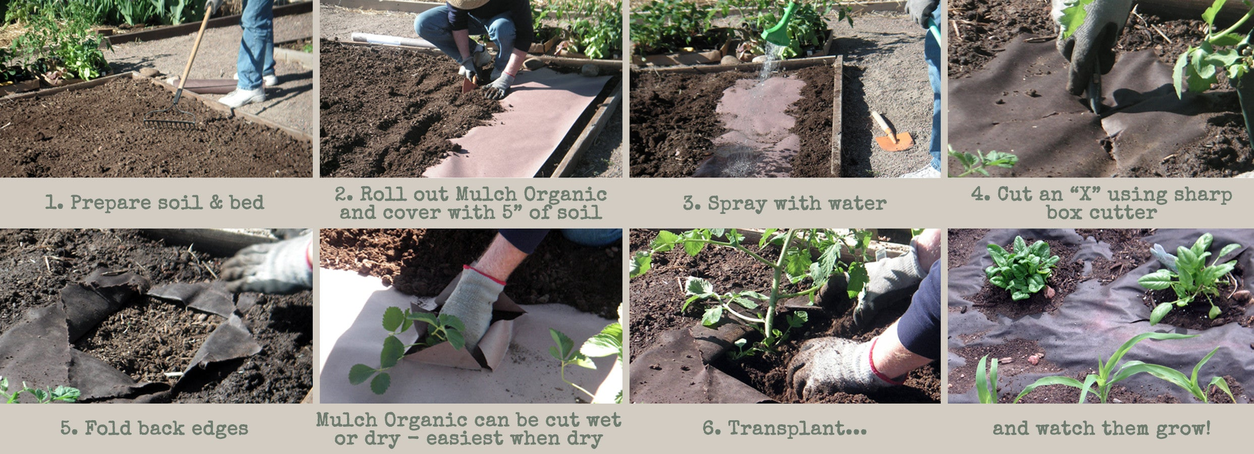 How to lay paper mulch onto the soil