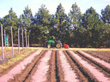 A farmer on a tractor in a filed laying out a long rolls of organic natural paper mulch over the soil and land to help with good plant growth
