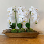Antique Dough Bowl c1900 and 3 Single White Orchid with Bamboo Stick and Moss Base