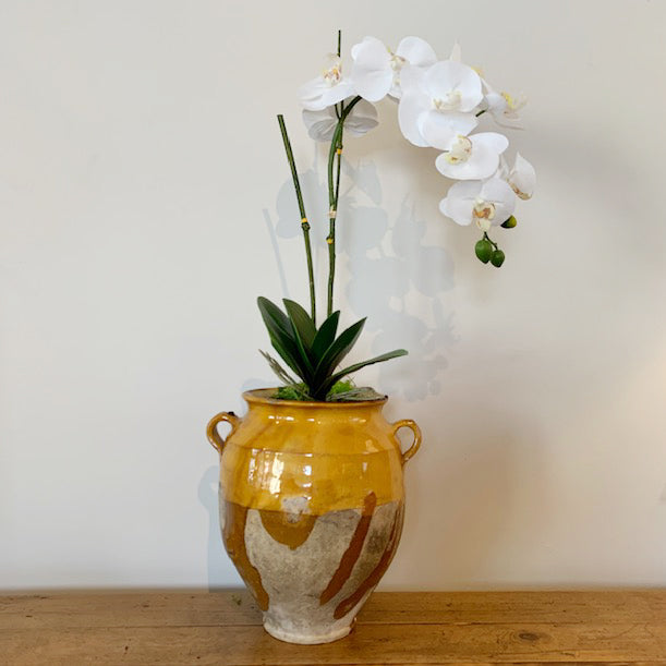 Antique French Confit Pot c1860 with a Single White Orchid with Bamboo Stick and Moss Base