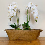 Antique Dough Bowl c1900 and 2 Single White Orchid with Bamboo Stick and Moss Base