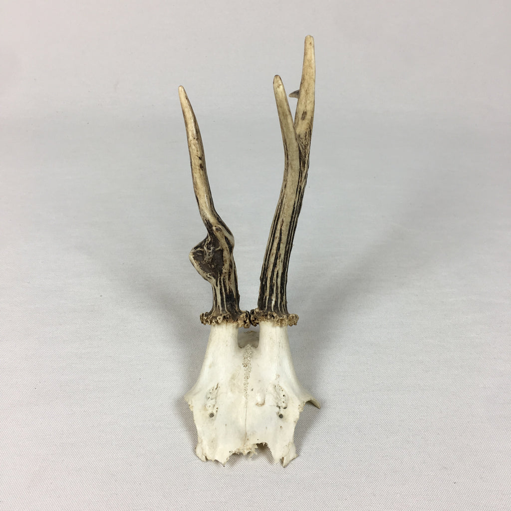 Small Antique Antlers
