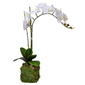 Soft Blue & White Porcelain Bowl with Base & a Single White Orchid with Bamboo Stick and Moss Base
