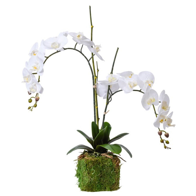 Multi-Colored Floral Porcelain Footbath with Base & a Double White Orchid with Bamboo Sticks and Moss Base