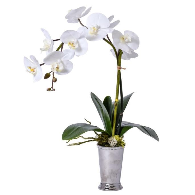 White Orchid in Silver Mint Julep Vase