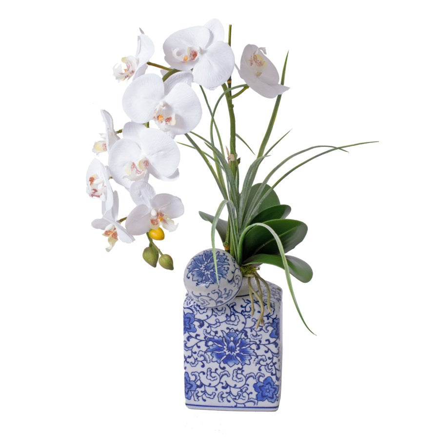 Single White Orchid with Blue & White Vase