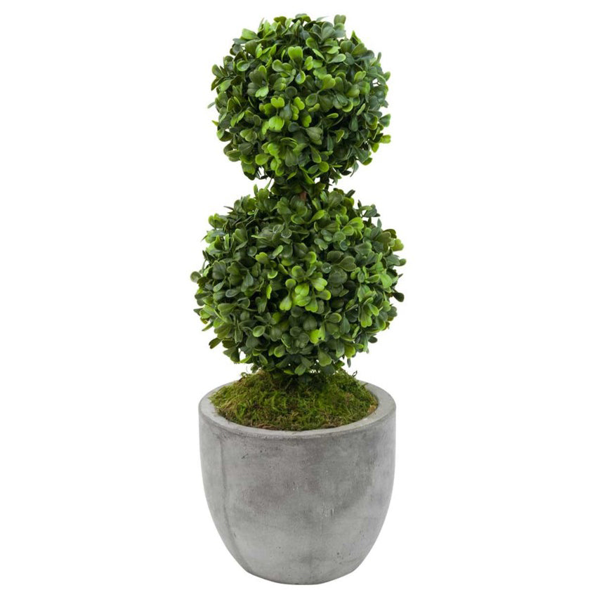 Boxwood Topiary in Grey Pot
