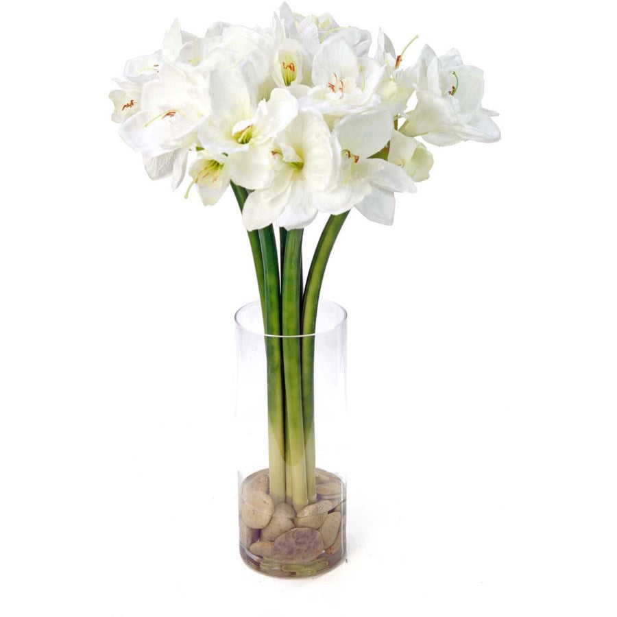 White Amaryllis in a Glass Cylinder with Cobblestones