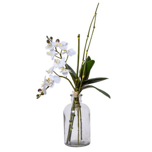 White Orchid in Glass Jar