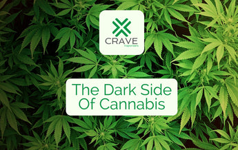 The Dark Side Of Cannabis