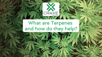 What Are Terpenes And How Do They Help?