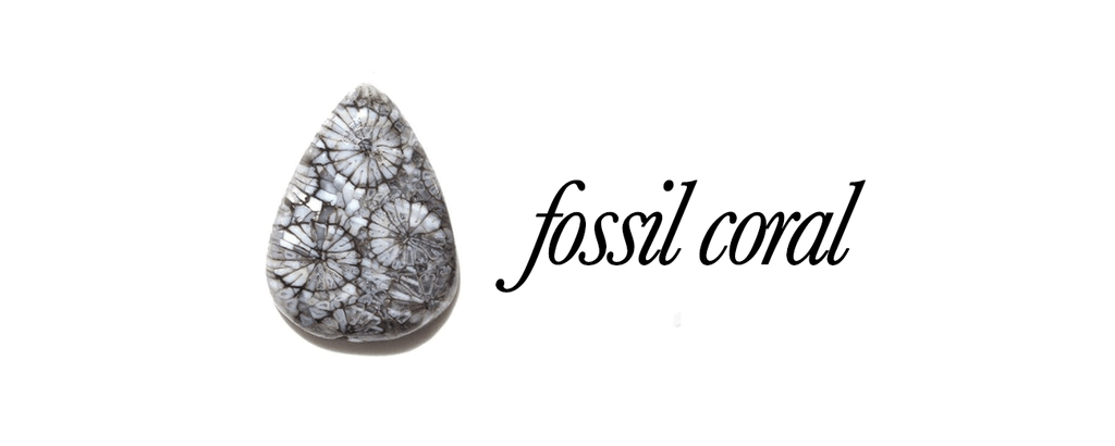 The 'Gifted' stone - Fossil Coral