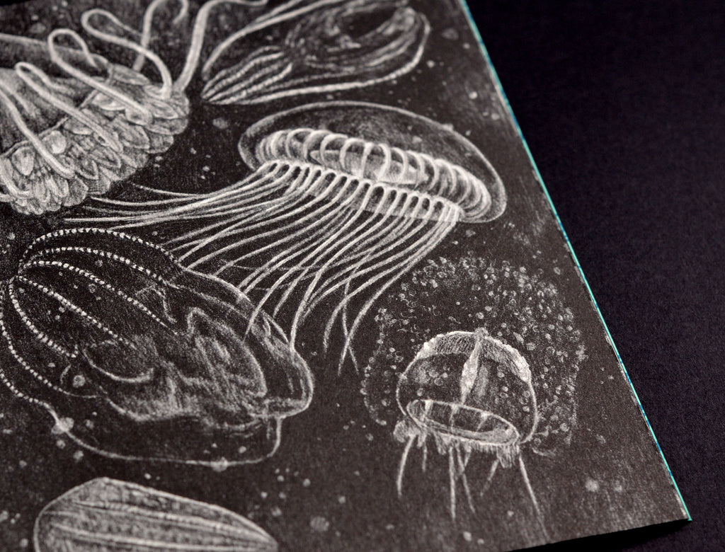 Zoe Keller Deep jellyfish close up