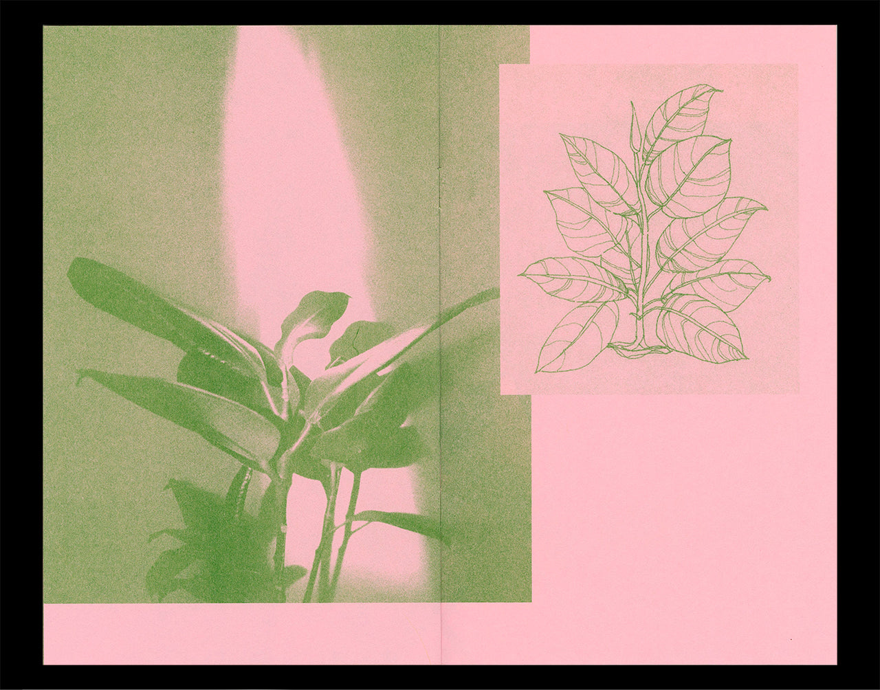 Interior spread of Nicole M. Doan's Portraits of Home showing a photograph an an illustration of plants printed in kelly green Riso ink on a pink paper background.