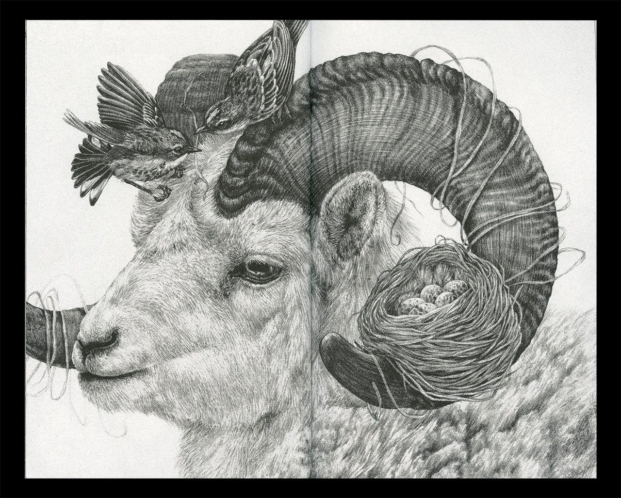"""Interior spread of Zoe Keller's zine """"Drawings"""" showing a graphite drawing of a ram"""