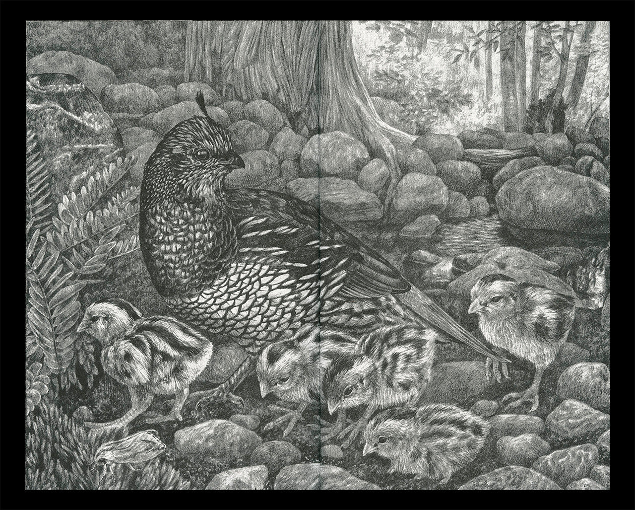 """Interior spread of Zoe Keller's zine """"Drawings"""" showing a graphite drawing of a quail family in the woods"""