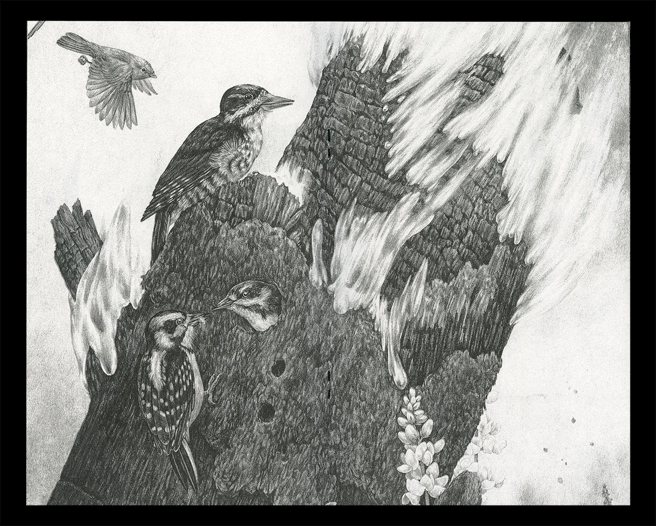 """Interior spread of Zoe Keller's zine """"Drawings"""" showing a graphite drawing of woodpeckers nesting in a tree"""