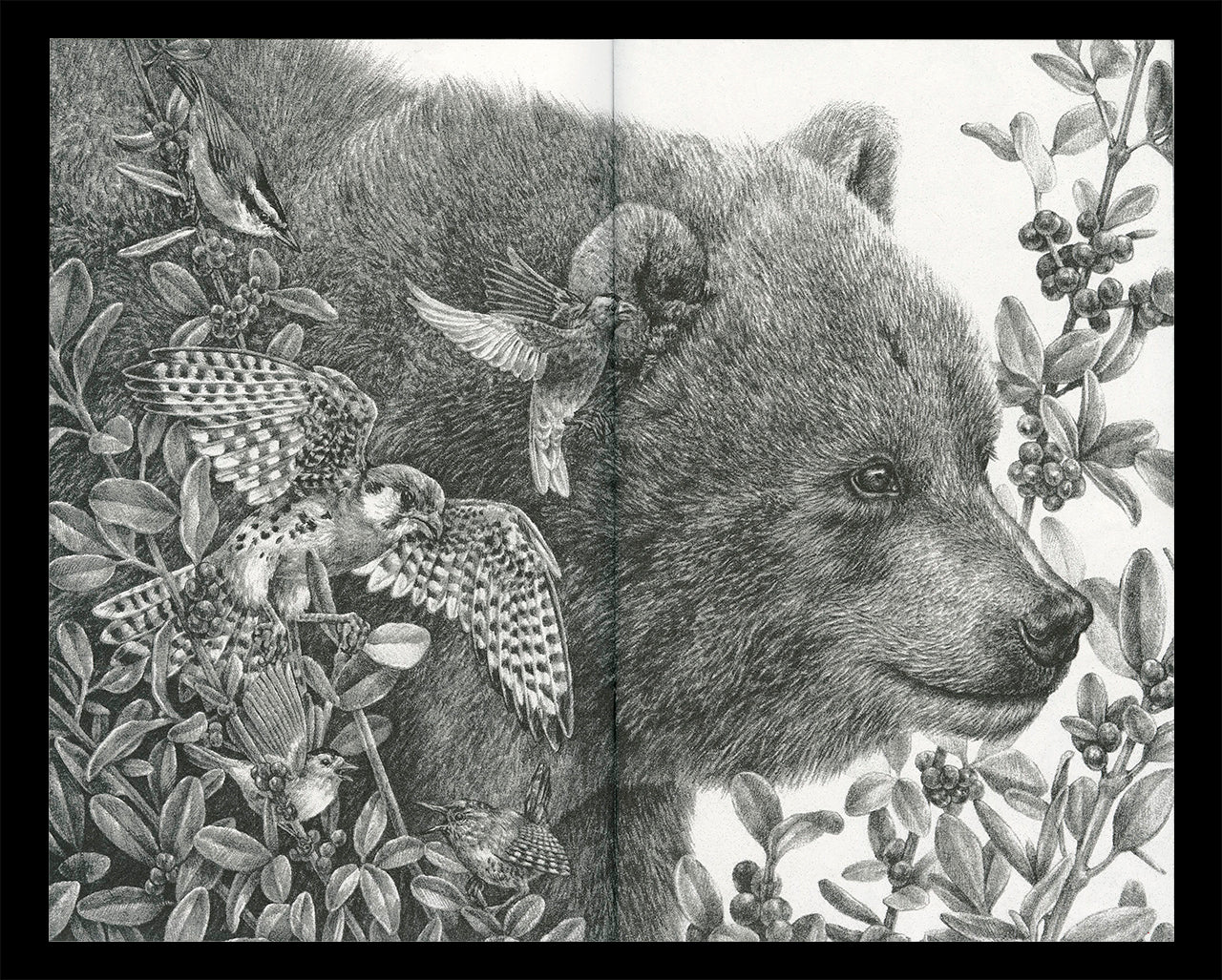 """Interior spread of Zoe Keller's zine """"Drawings"""" showing a graphite drawing of a bear"""