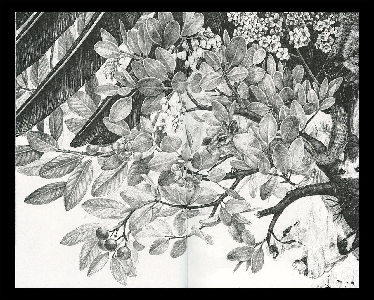 """Interior spread of Zoe Keller's zine """"Drawings"""" showing a graphite drawing of a chipmunk in a tree"""