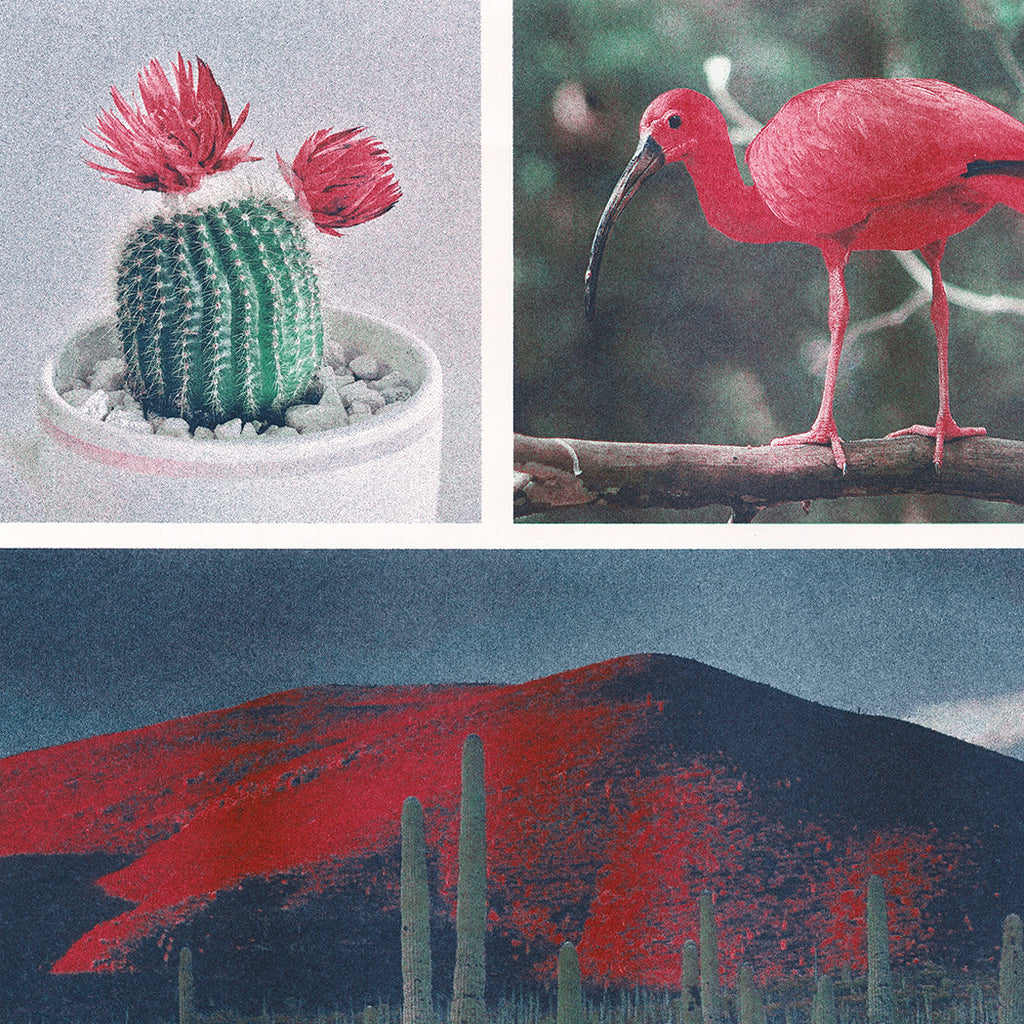 Photographs of a cactus, bird, and landscape Risograph printed in steel, cranberry, and agave ink