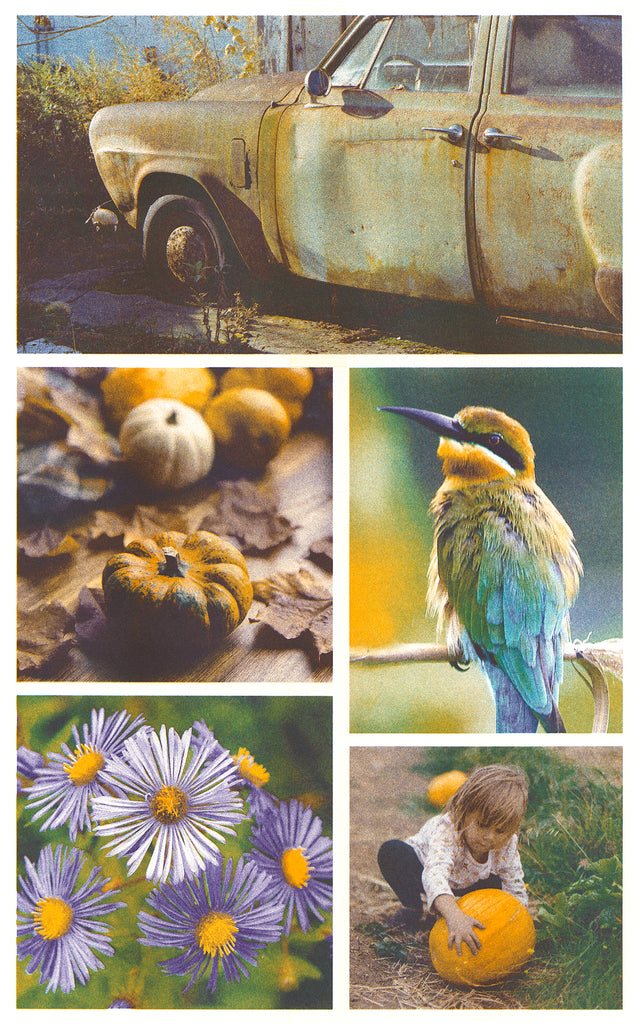 Printed image of 5 different photographs Riso printed with the light teal, purple, and sunflower ink profile