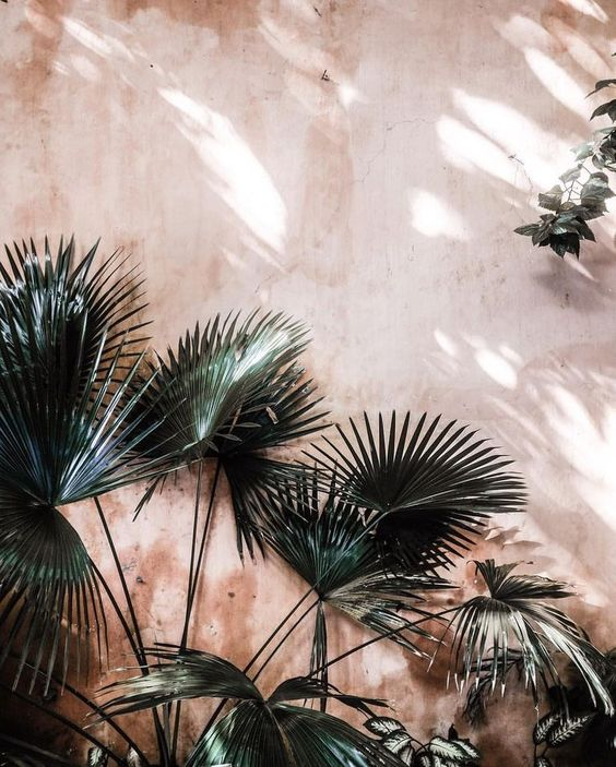 Palm trees against blush pink wall