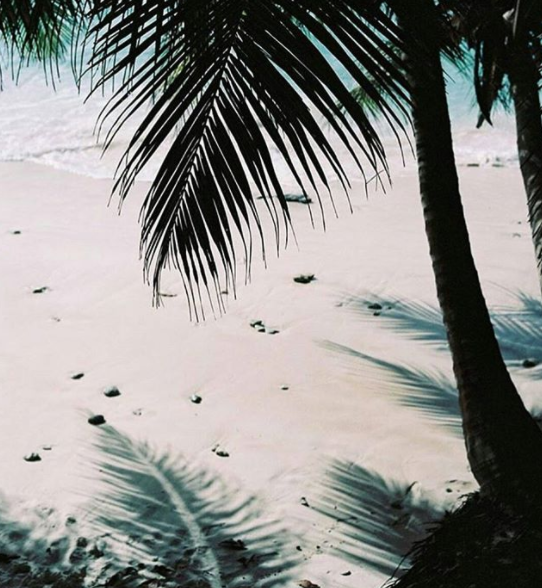 Palm trees and shadows on beach