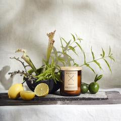 Wildfolk Candle | Lemon Myrtle
