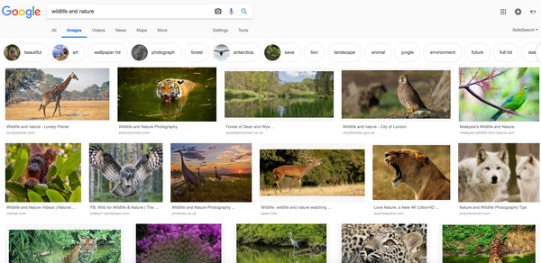Google search wildlife and nature