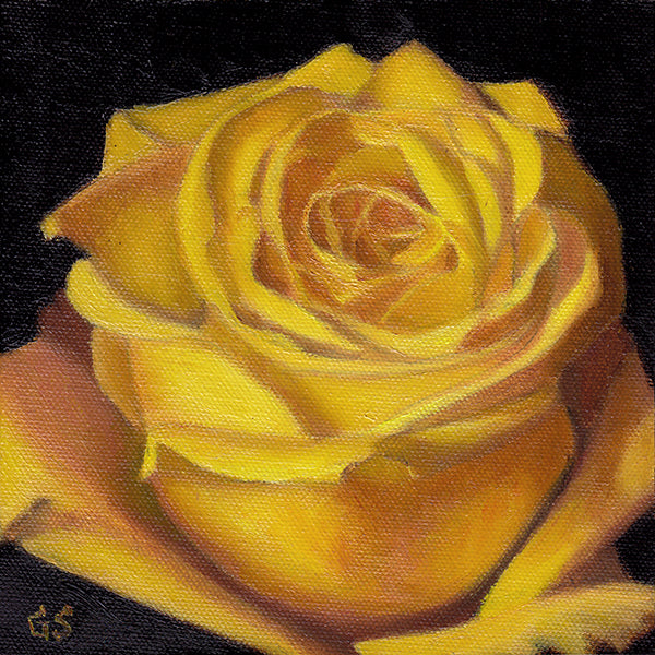 Yellow Rose Study