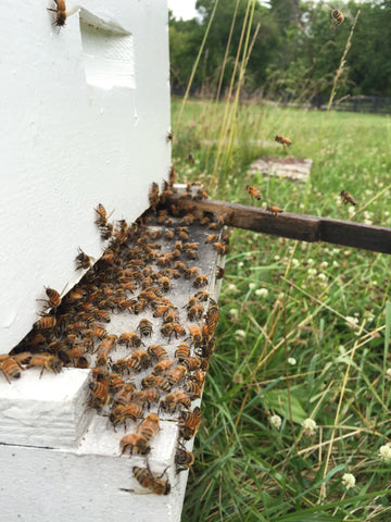 honey bee hive foragers