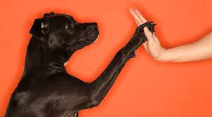 High 5 for Helping Dogs in Need!