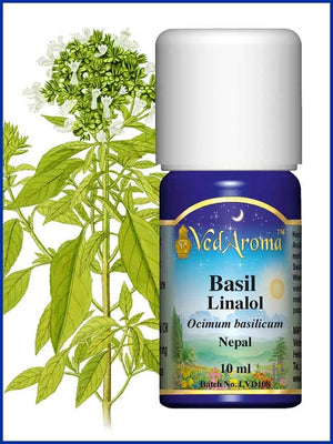 Basil Linalol 10 ML