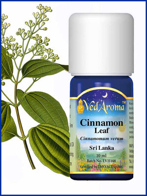 Cinnamon Leaf 10 ML