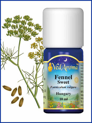 Fennel Sweet 10 ML