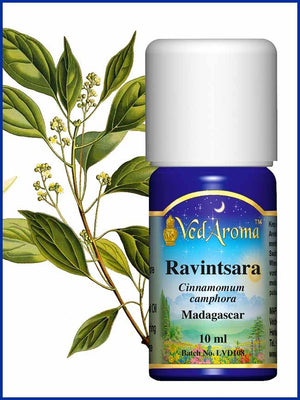 Ravintsara 10 ML