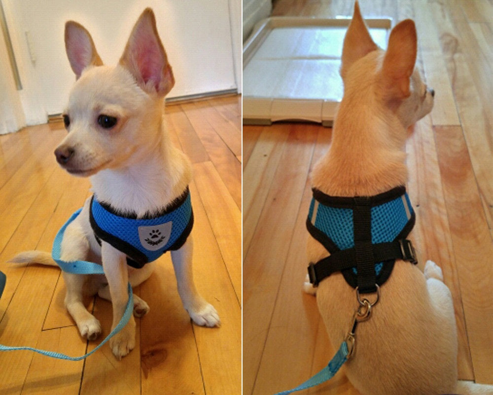 reflective dog harness and dog leash