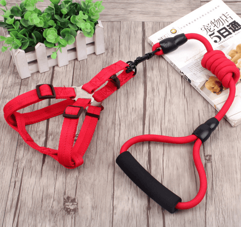 Image of 3 in 1 Dog Leash, Dog Collar & Dog Harness - Home & Garden, Furniture/Pet Products/Dog Supplies