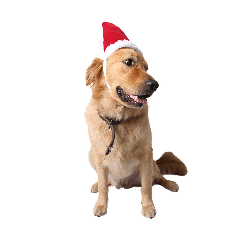 Christmas Red Hats For Pets - Home & Garden, Furniture / Pet Products / Cat Supplies