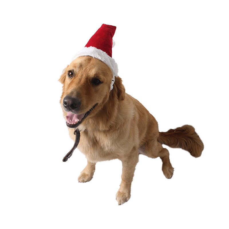 Christmas Hats For Dogs.Christmas Red Hats For Pets